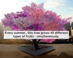 Every Summer, This Tree Grows 40 Different...