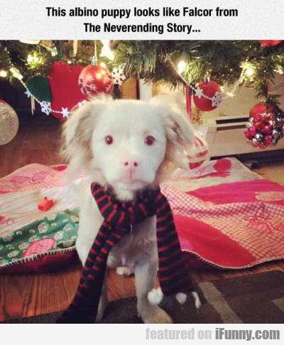 This Albino Puppy Looks Like Falcor From...