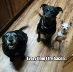 Every Time I Fry Bacon...