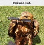 Official Bird In Detroit...