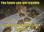 You Know You Got Trouble When Your Tribbles Lose..