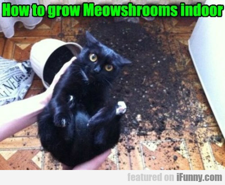 How To Grow Meowshrooms Indoor