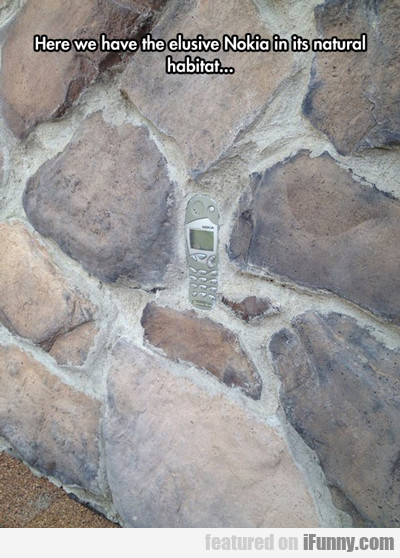 Here We Have The Elusive Nokia In Its Natural...