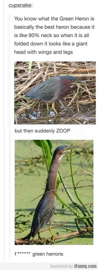 You Know What The Green Heron Is...