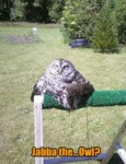 Jabba The ..owl