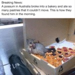 Breaking News A Possum.