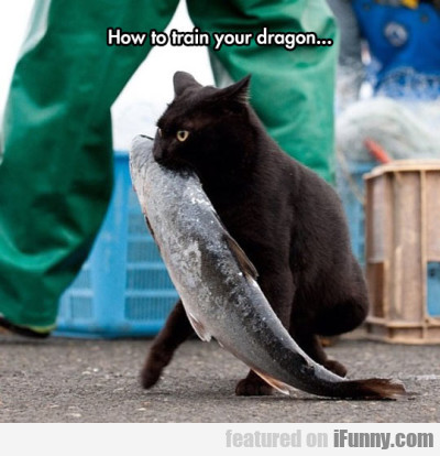 How To Train Your Cat Dragon...