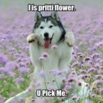 I Is Pritti Flower. U Pick Me.