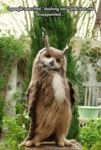 I Googled Searched Dashing Owl...