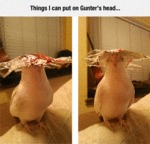 Thing's I Can Put On Gunter's Head...