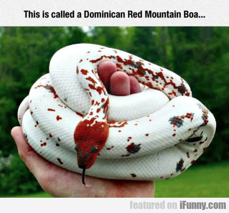 this is called a domincan