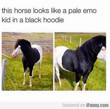 This Horse Looks Like A Pale