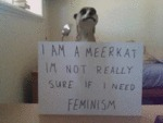I Am A Meerkat Im Not Really