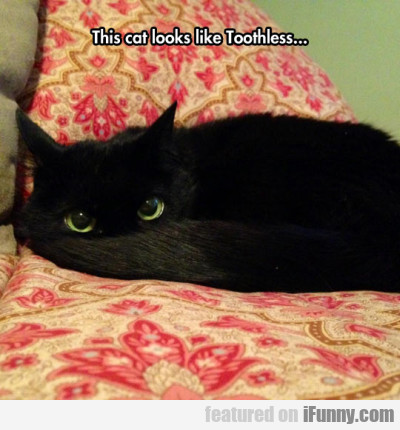 this cat looks like toothless.