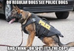Do Regular Dogs See Police