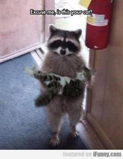 Excuse Me, Is This Your Cat