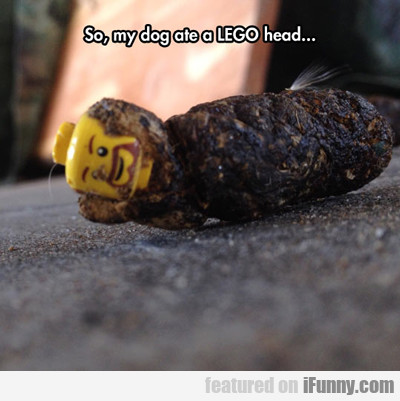 So, My Dog Ate A Lego Head...