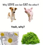 Why Love But Eat The Other...