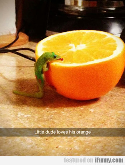 Little Dude Loves His Orange...
