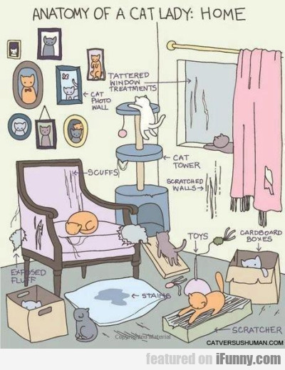 Anatomy Of Cat Lady Home