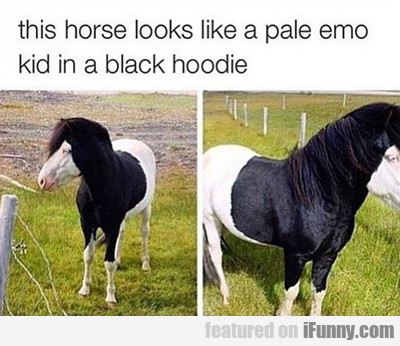This Horse Looks Like A Pale Emo Kid...