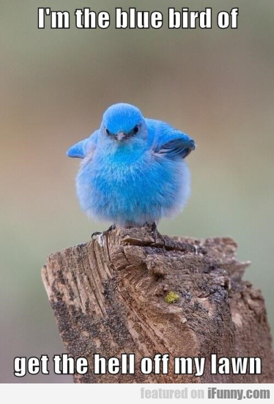 I M The Blue Bird Of Get The Hell.