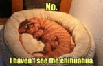 No. I Havent See The Chihuahua