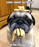 I Didn't Chose The Pug Life - The Pug Life...