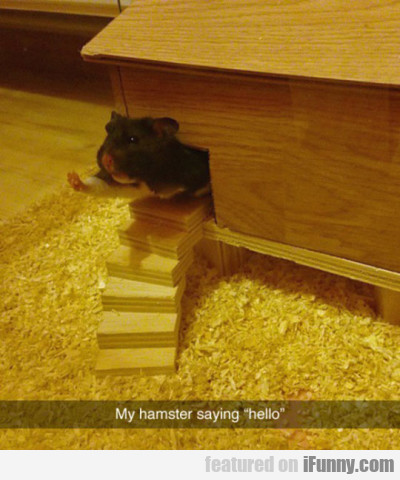 My hamster saying hello