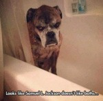 Looks Like Samuel L Jackson Doesn't Like Baths..
