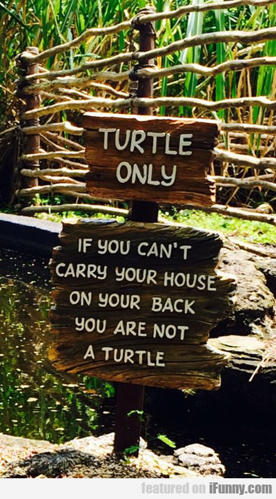 Turtle Only...