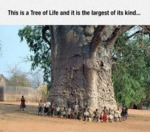 This Is A Tree Of Life...