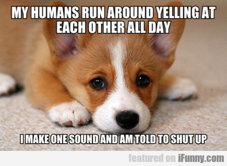 My Humans Run Around Yelling At...
