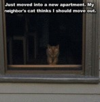 Just Moved Into A New Apartment. My Neighbor's...