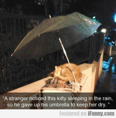 A Stranger Noticed This Kitty Sleeping In The Rain