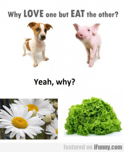 Why Love One But Eat The Other? Yeah Why?