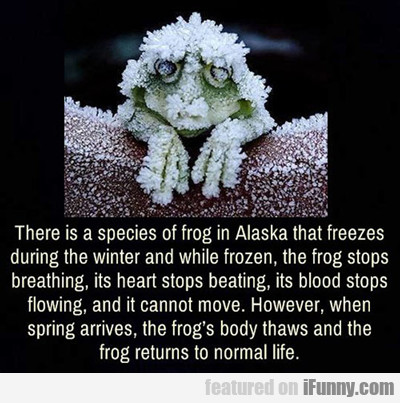 there is a species of frog in alaska...