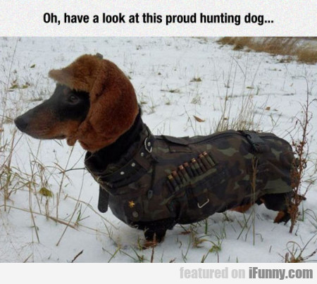 Oh, Have A Look At This Proud Hunting Dog...