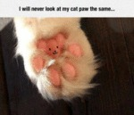 I Will Never Look At My Cat Paw The Same...