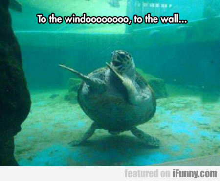 To The Windoooooooo, To The Wall...