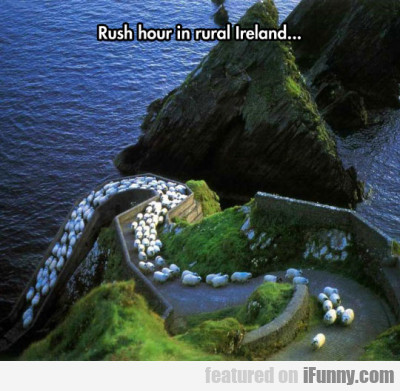 Rush Hour In Rural Ireland...