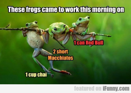 These Frogs Came To Work This Morning