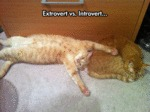 Extrovert Vs Introvert.