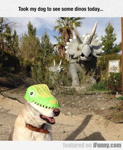 Took My Dog To See Some Dinos