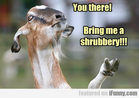 You There Bring Me A Shrubbery
