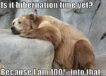 Is It Hibernation Time Yet.