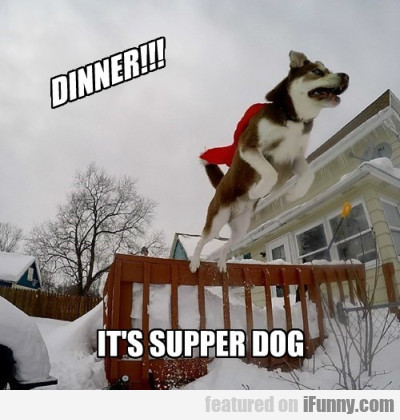 Dinner Its Supper Dog