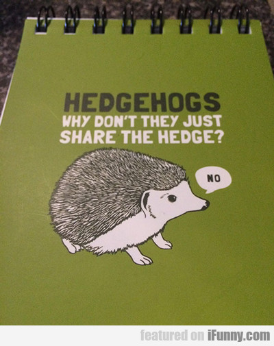 Hedgehogs, Why Don't They Just Share The Hedge...