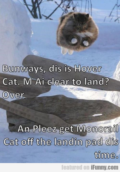 Bunways Dis Is Hover Cat.
