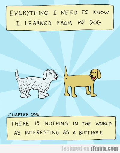 Everything I Need To Know I Learned From My Dog